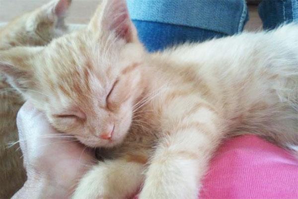 cat sitter ozaukee